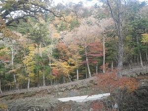 パトロールと秋の模様